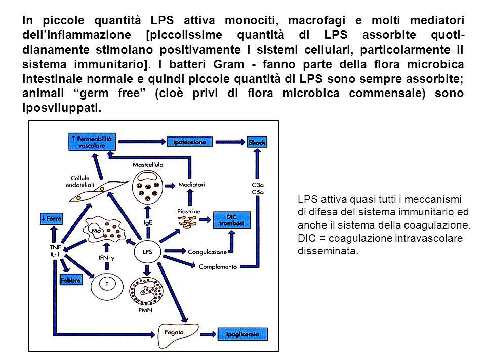 In piccole quantità LPS attiva monociti, macrofagi e molti mediatori dell'infiammazione [piccolissime quantità di LPS assorbite quoti-dianamente stimolano positivamente i sistemi cellulari, particolarmente il sistema immunitario]. I batteri Gram - fanno parte della flora microbica intestinale normale e quindi piccole quantità di LPS sono sempre assorbite; animali germ free (cioè privi di flora microbica commensale) sono iposviluppati.